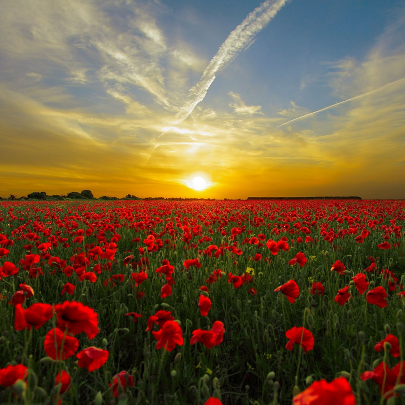 Anzac Day services around the Bay