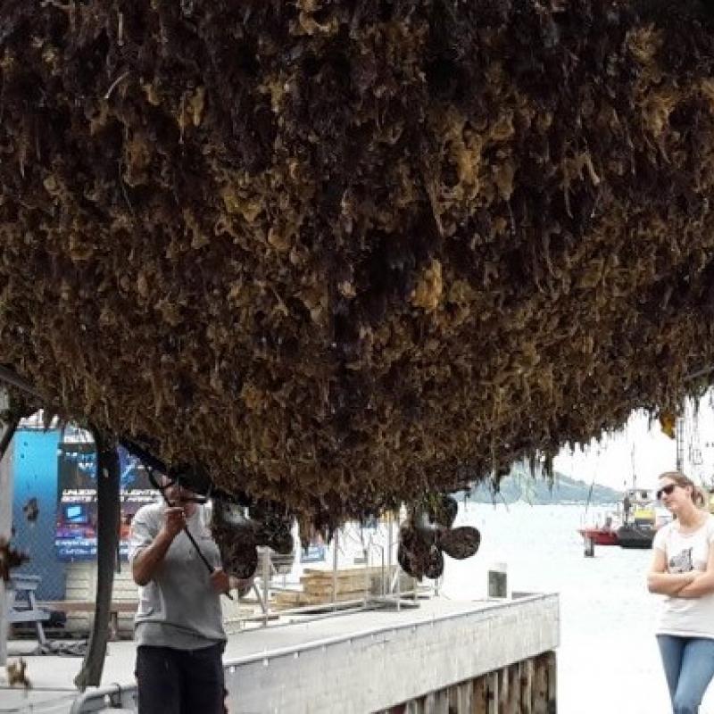 Boaties urged to keep their hulls clean