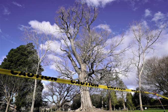 Caution advised near Frimley Park tree