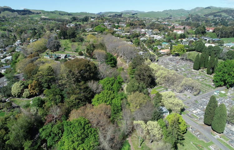 Consultation over future of Keirunga Gardens trees extended