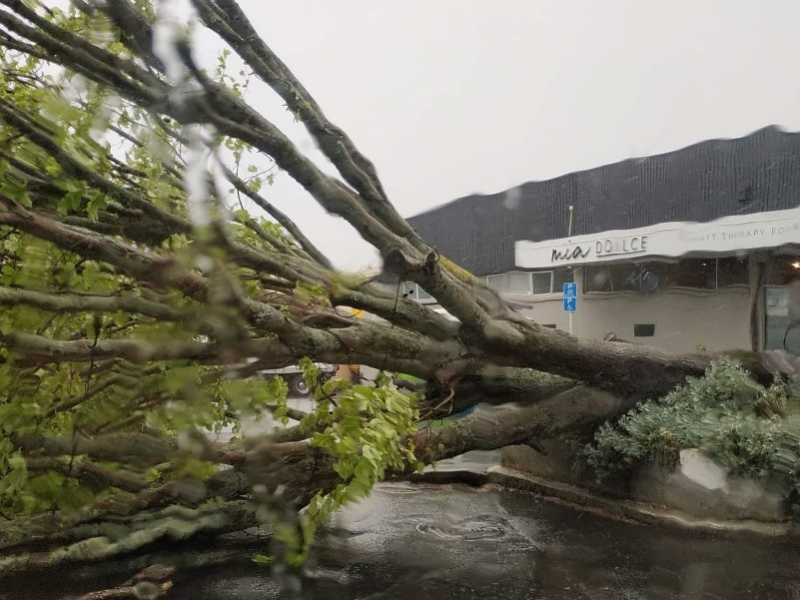Fallen tree takes out powerline in Havelock North