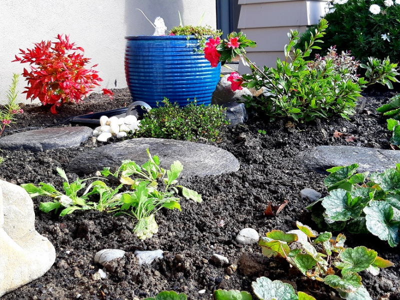 Gardening: Creating your own water feature