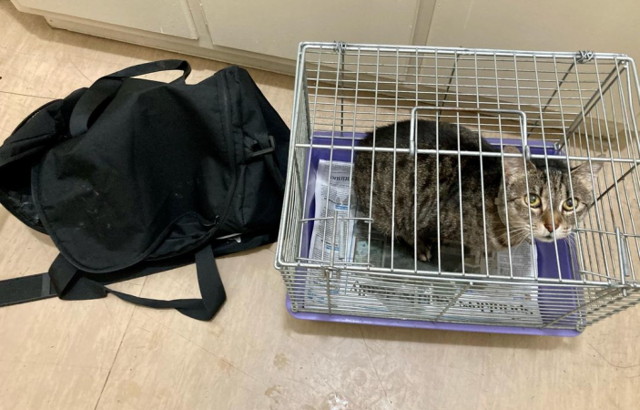 'Hallelujah': SPCA Napier calls for information after cat found abandoned behind church