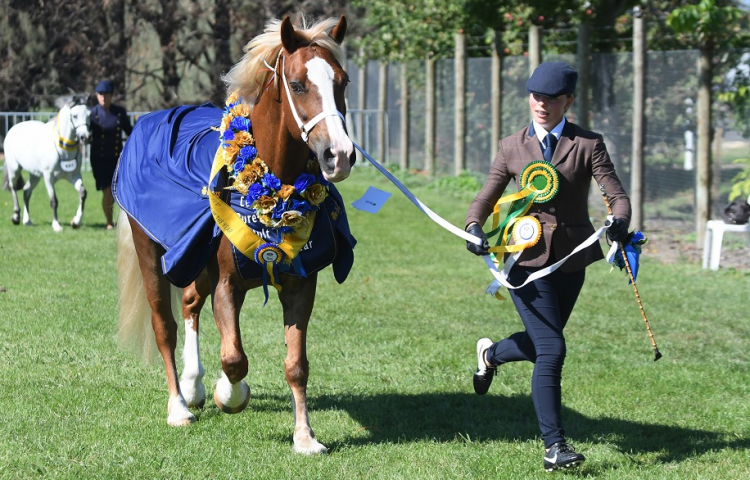 Olympians in the Ribbons at Land Rover Horse of the Year