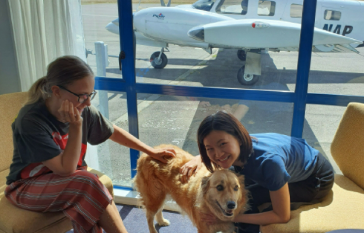 Pets fly high with Air Napier