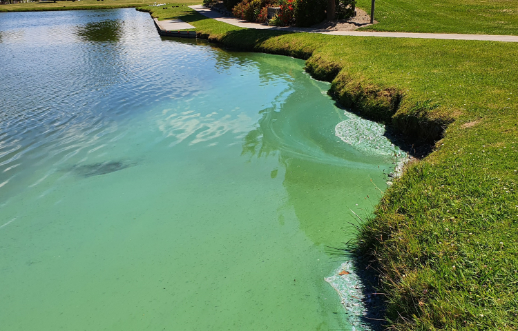 Potentially harmful algal bloom found at Anderson Park