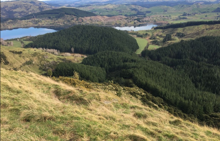 Proposal to replant Tūtira Regional Park with mix of natives and pine