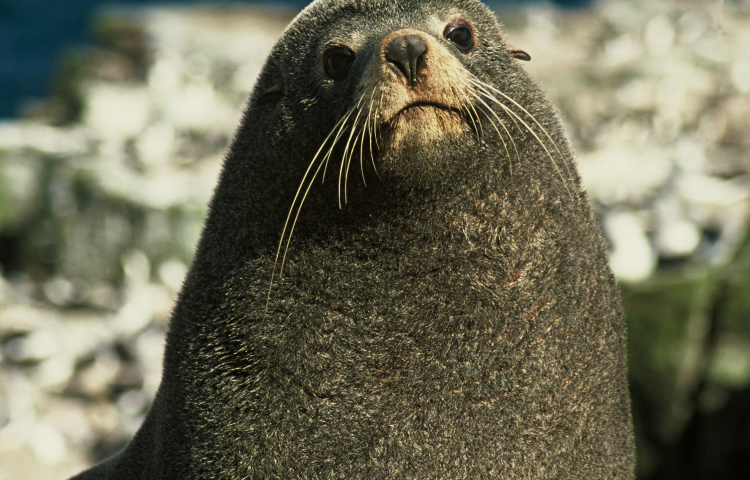 Residents asked to keep distance from seals over coming months.