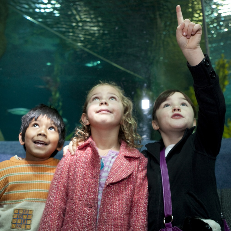 Special Children's Day deals on offer in Napier this Sunday