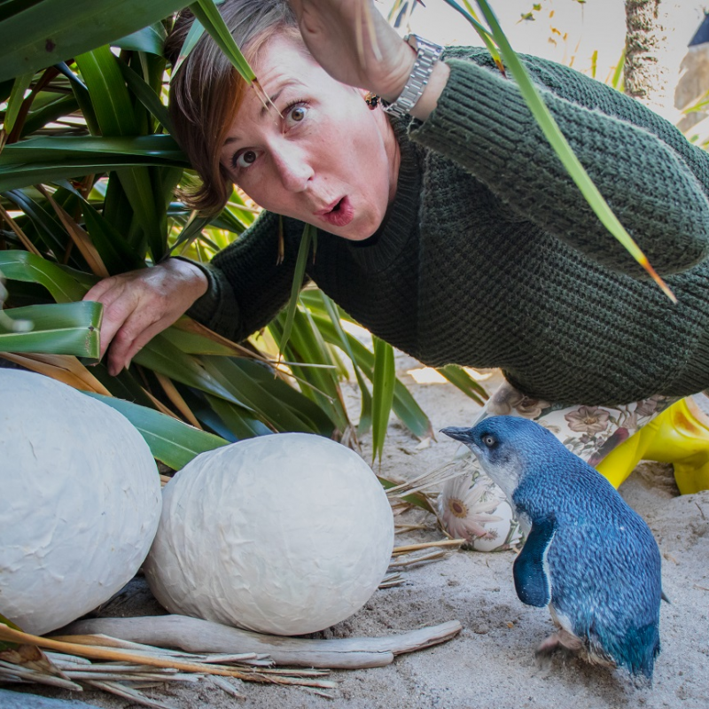 Time to have a crack at the Great Kiwi Egg Hunt
