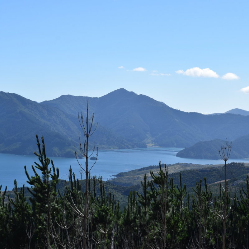 Travel: Nature lessons in the picturesque Marlborough Sounds