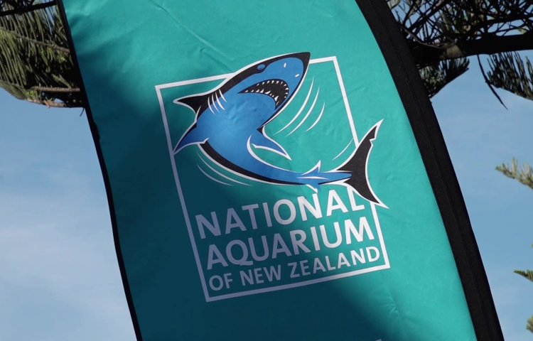 VIDEO: Education takes centre stage at National Aquarium of New Zealand