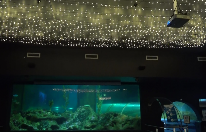 VIDEO: National Aquarium of New Zealand reaches for the stars